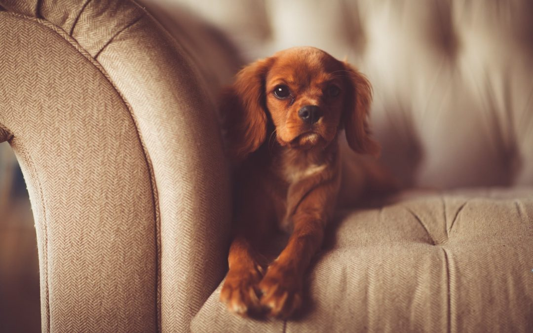 Should You Allow Pets at Your Rental Property?